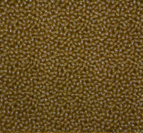 fabrics-26-mario-pepi-collection